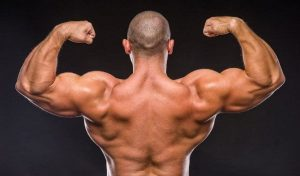 Growth of muscles